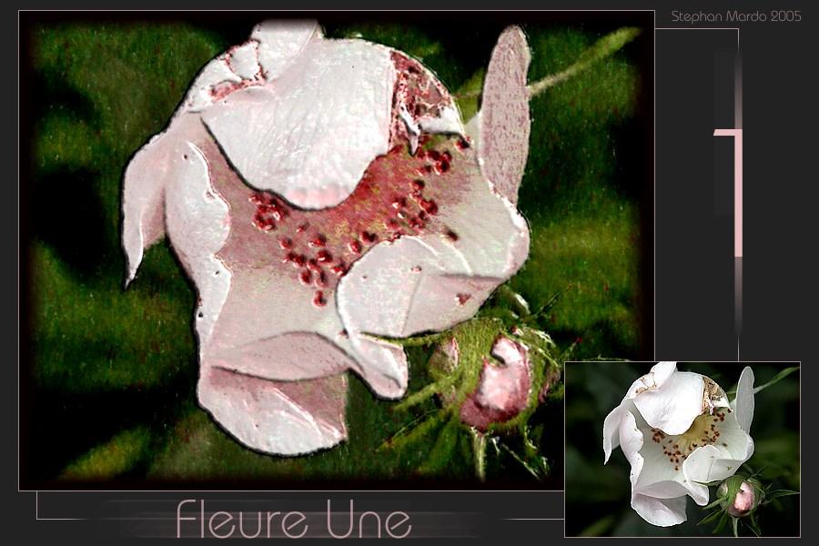 """""""Fleure Une"""""""