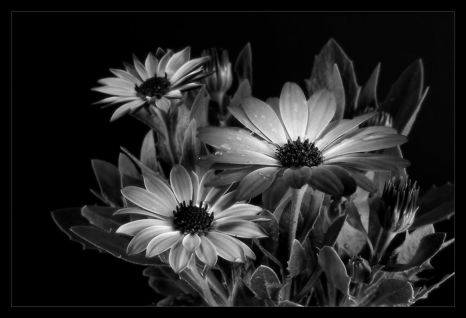 fleurir monochrome
