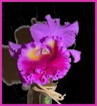 Fleuron d'orchidée catleya
