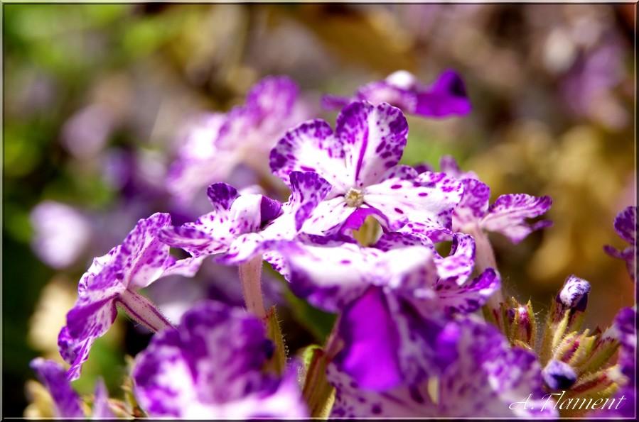 fleurs..