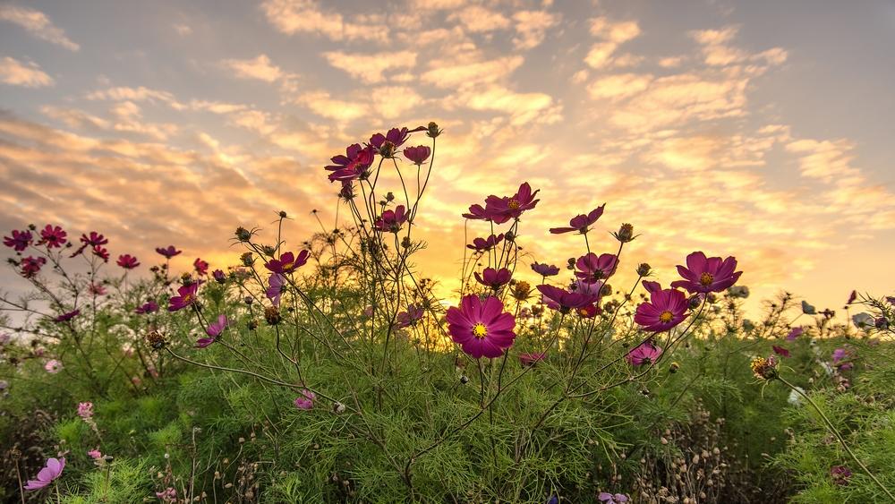 Fleurs au crépuscule