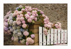 Fleurs bretonnes