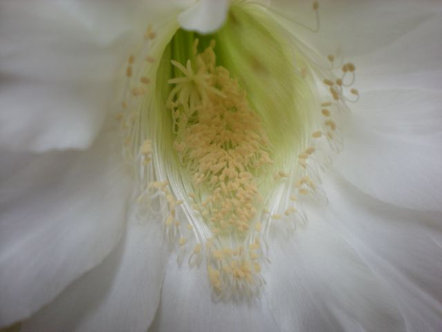 Fleurs by BIPHOTO