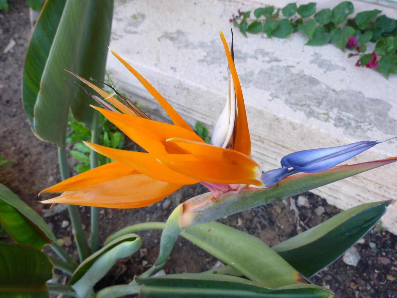 fleurs d espagne