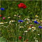 fleurs de couleur vive