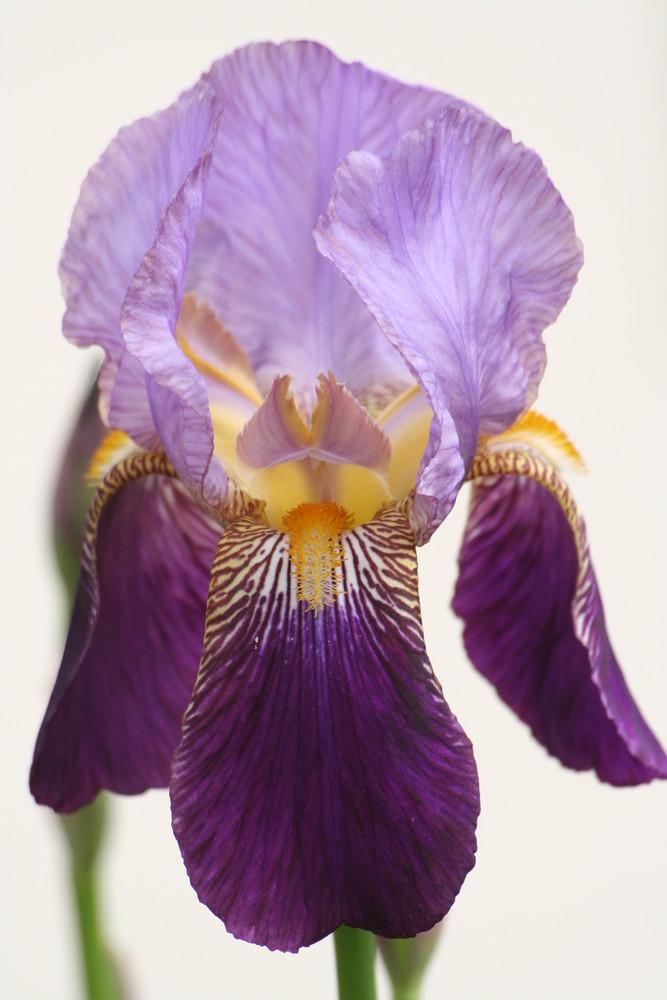 Fleurs de jardin photo et image | jardins, nature Images ...