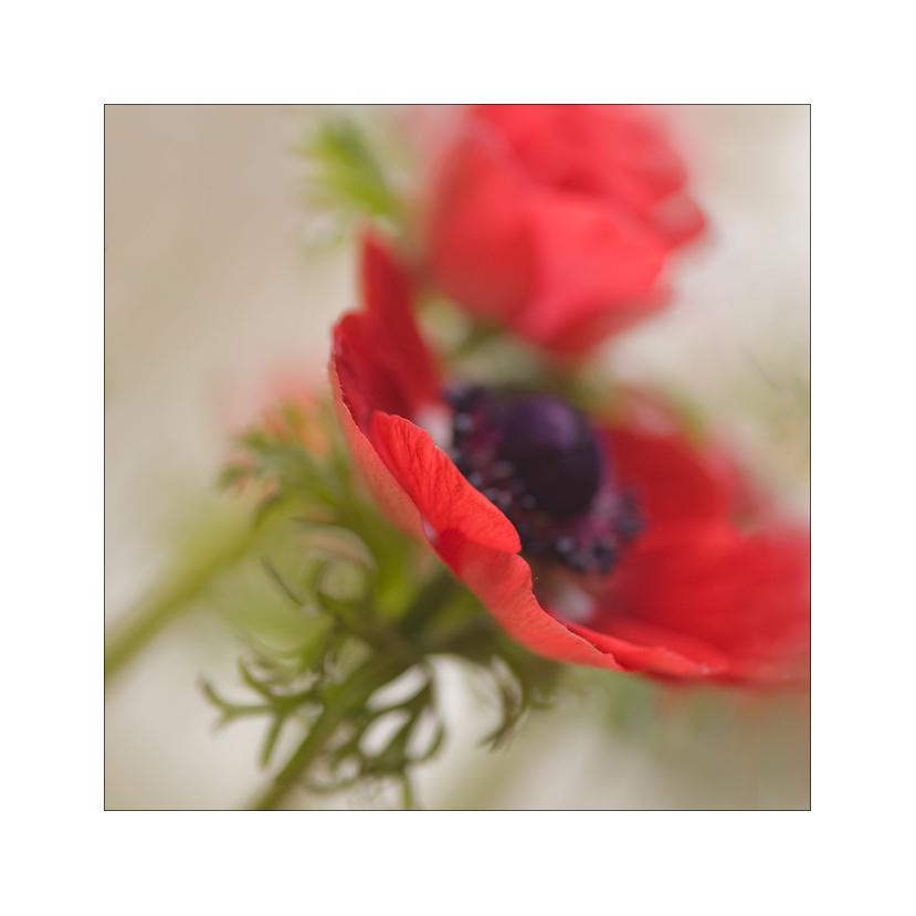 fleurs de printemps #1