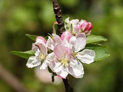 Fleurs de printemps.