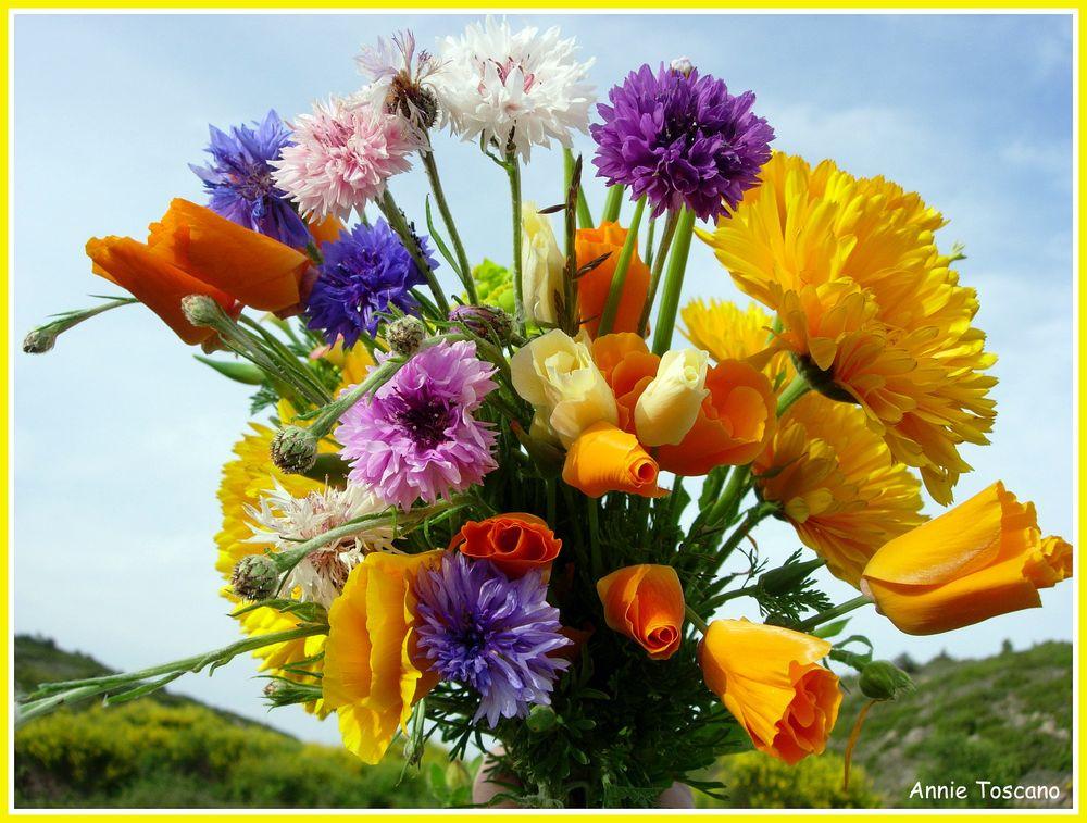 Fleurs des champs.... photo et image   fleurs, nature ...