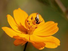 fleurs des jacheres (3)