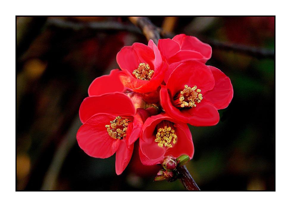 Fleurs du japon photo et image fleurs nature images for Fleurs internet