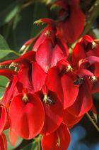 Fleurs et Abeilles