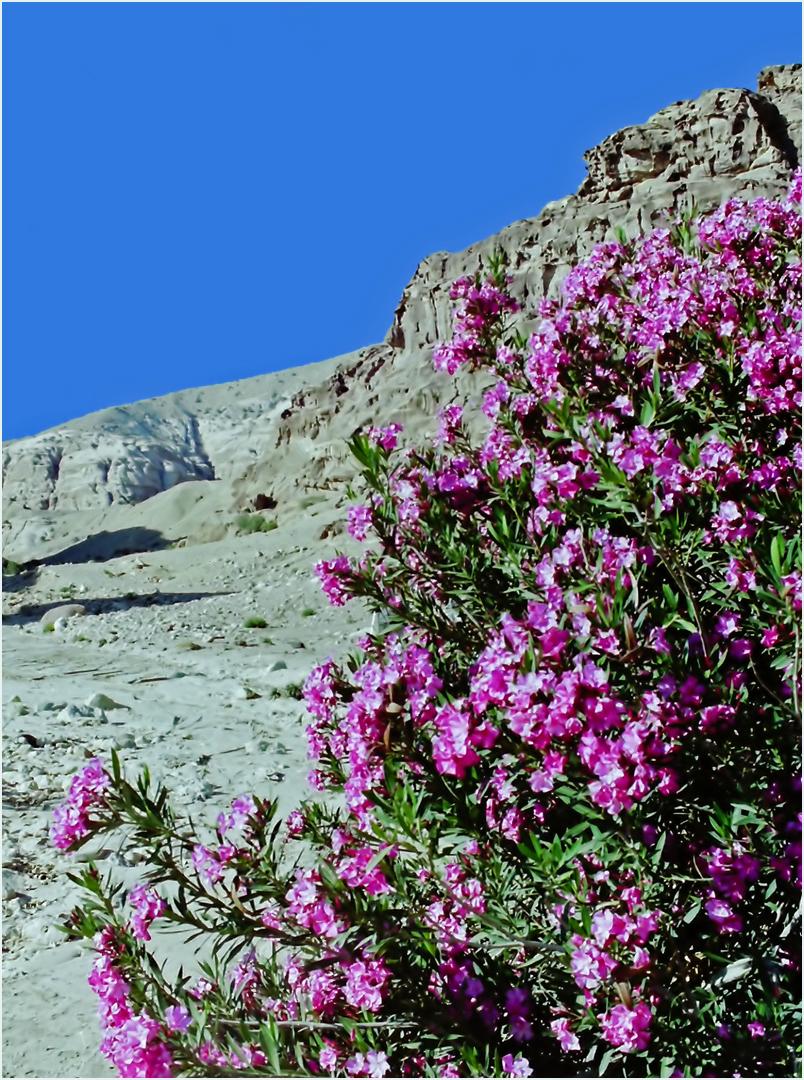 Fleurs et aridité