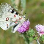 * fleurs et papillon *