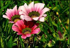 Fleurs pour mes amis et amies