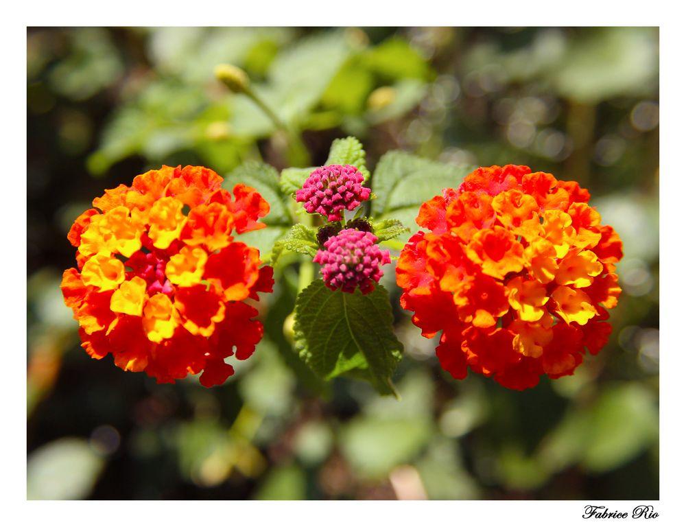 Fleurs symétriques