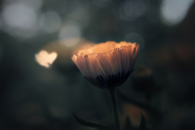 """Fleur""ter"