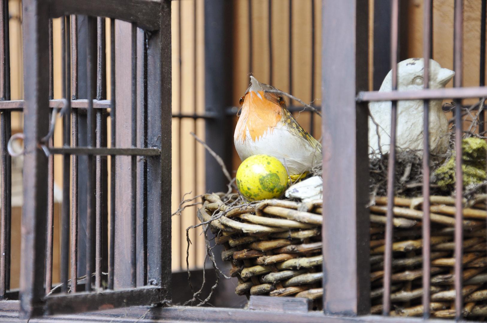 Flieg - der Käfig ist offen ...