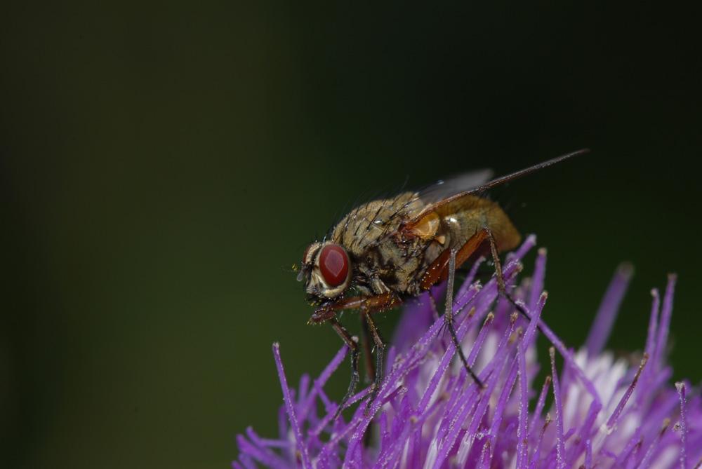 Flieg Fliege, flieg!