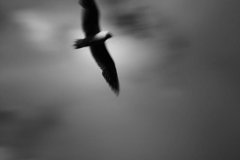 __Flieg, mein Bengel, flieg...