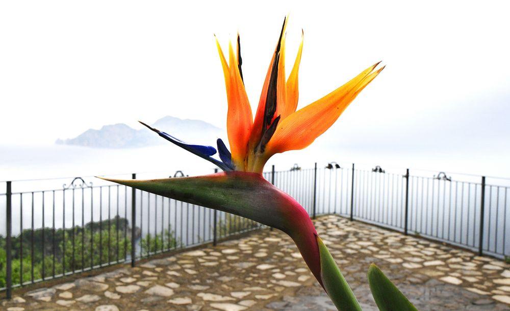 flieg nach capri