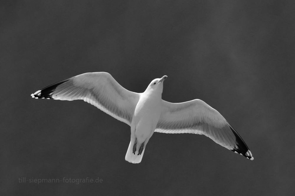 Flieg wie der Wind