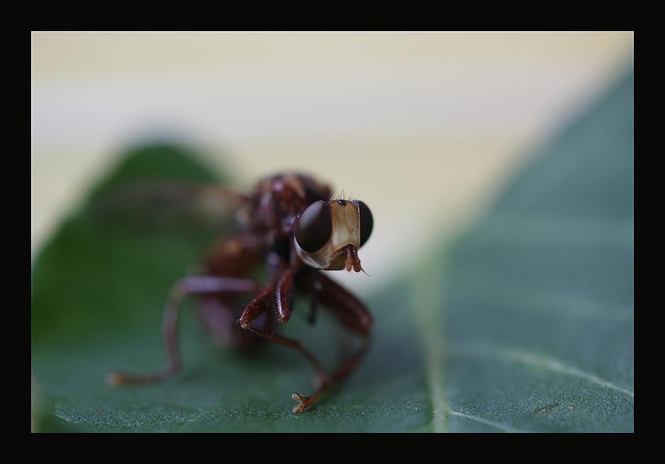Fliege ??