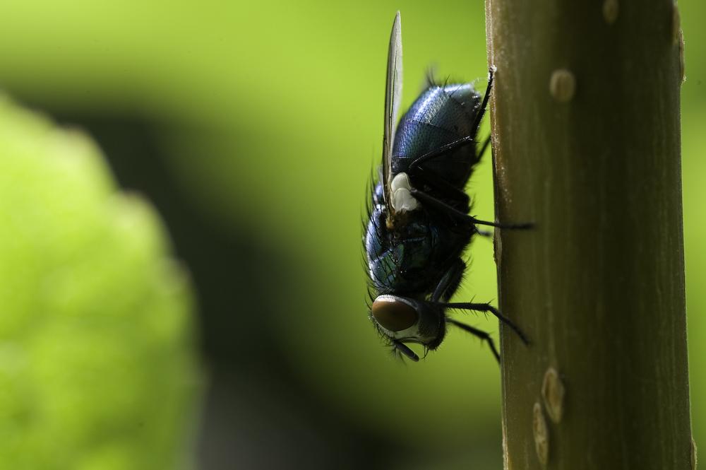 Fliege 2