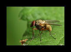 Fliege 3