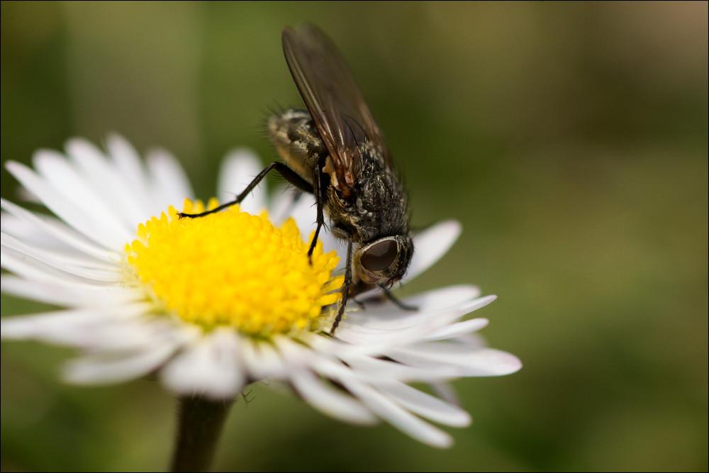 ...Fliege...