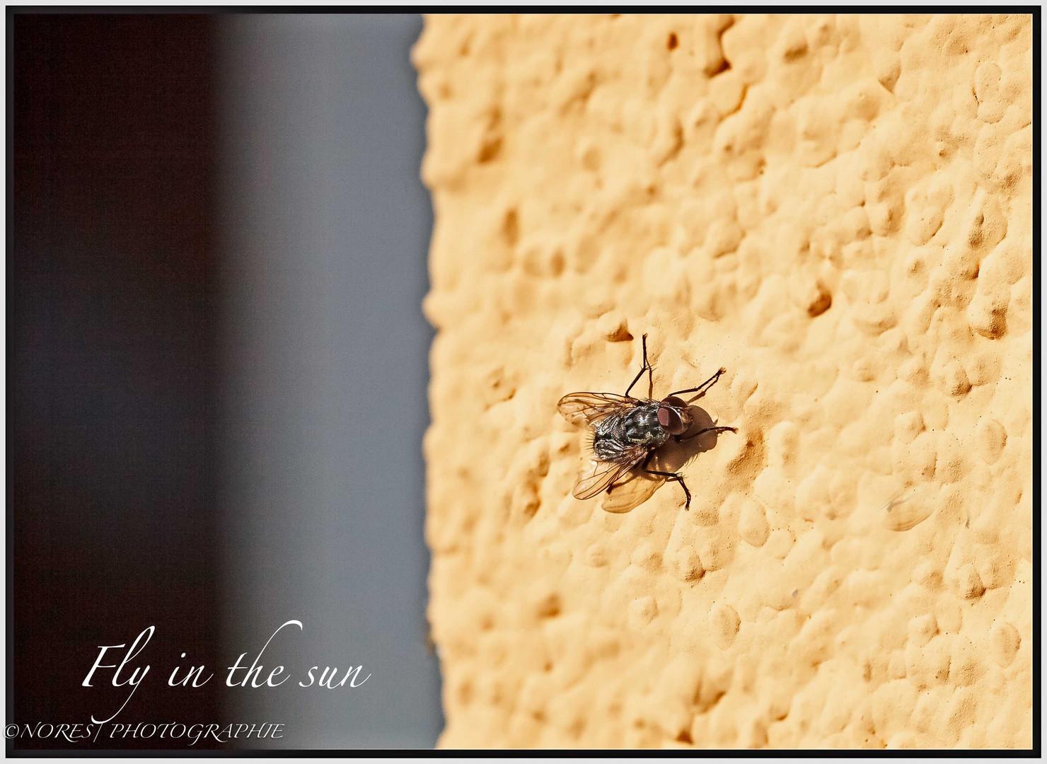 Fliege an der Wand