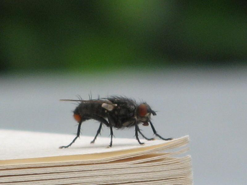 Fliege auf dem Buch