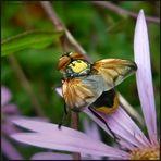 Fliege des Jahres 2014