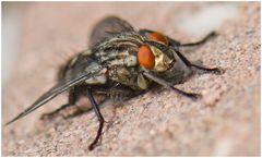 Fliege flieg!!!!