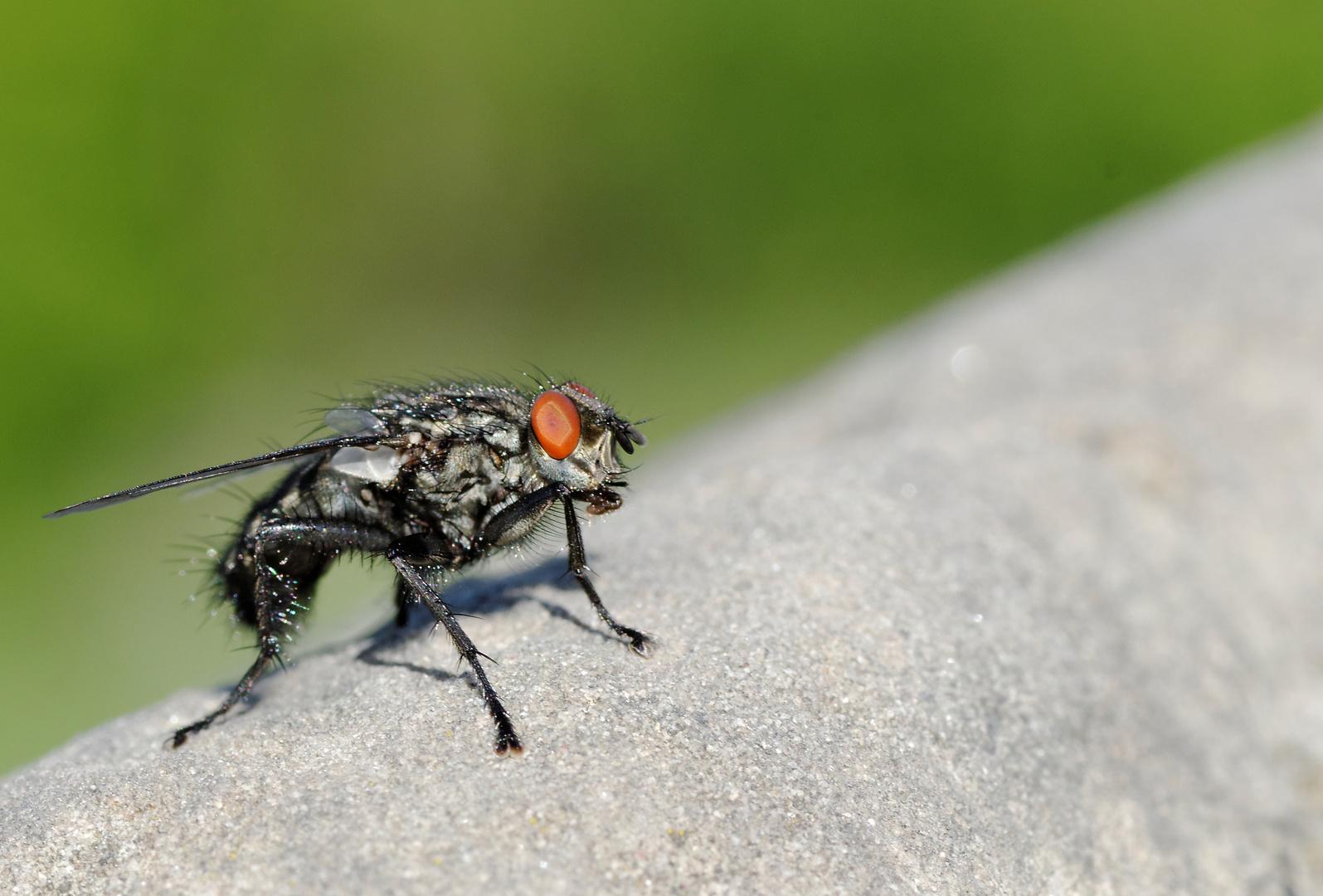 Fliege ganz groß