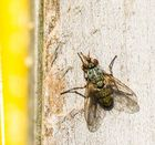 Fliege im Frühling nimmt ein Sonnenbad auf dem Dach des Insektenhotels