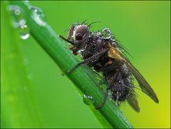 Fliege im Regen