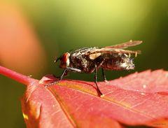 Fliege in der Herbstsonne