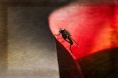 Fliege in Rot