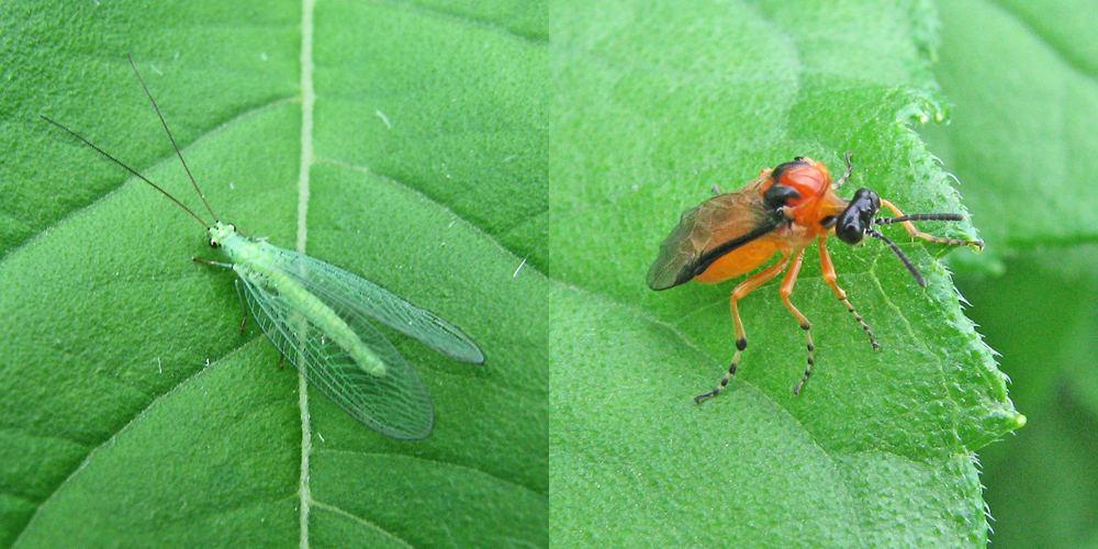 Fliege, Käfer.....oder?