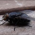 Fliege, macht Zwischenlandung