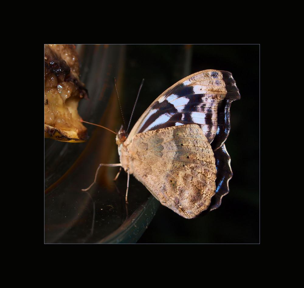 Fliege mit Schmetterling...