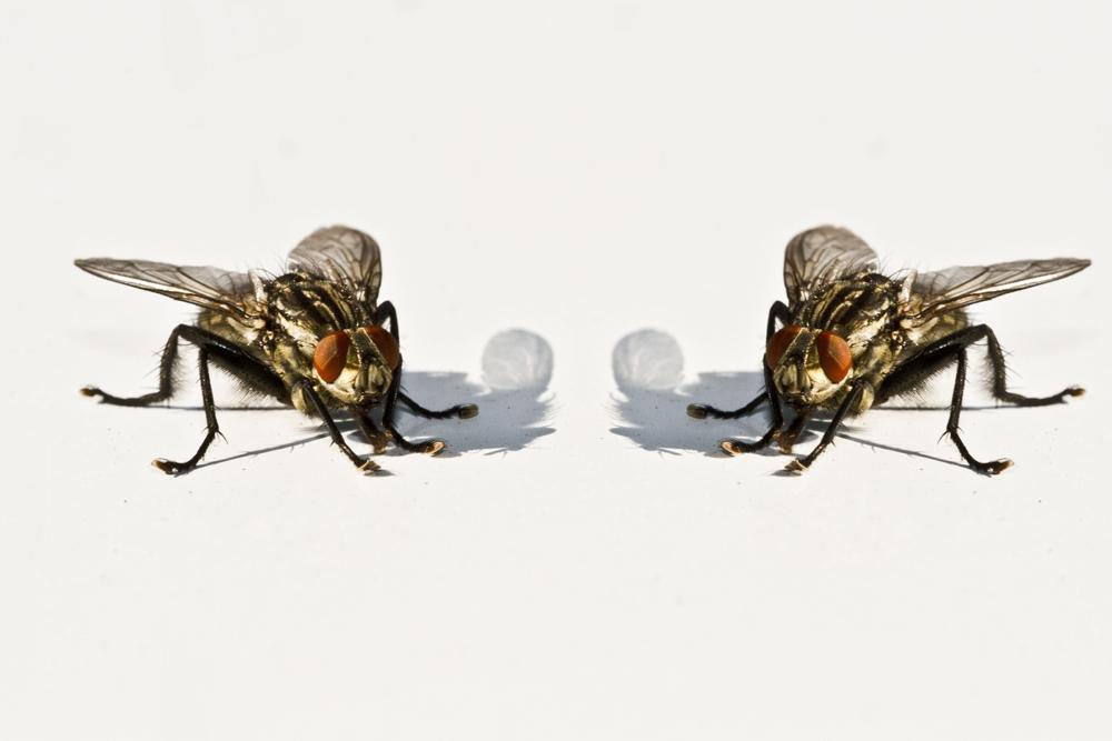 Fliege summ summ