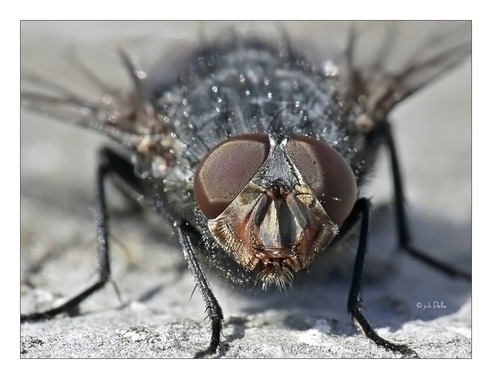 Fliege - Testaufnahme