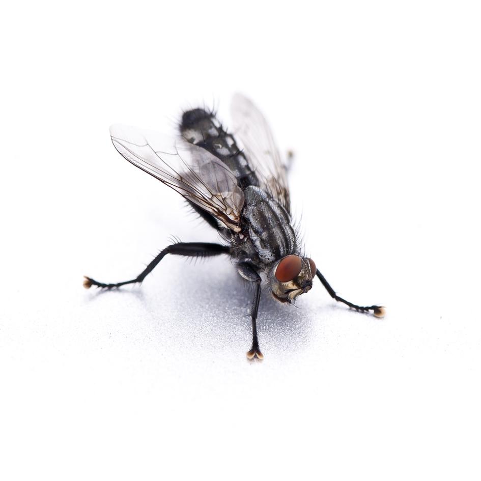 Fliege vor Start