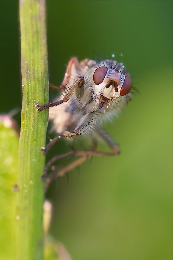 Fliege - was sitzt den hier im Feld..?