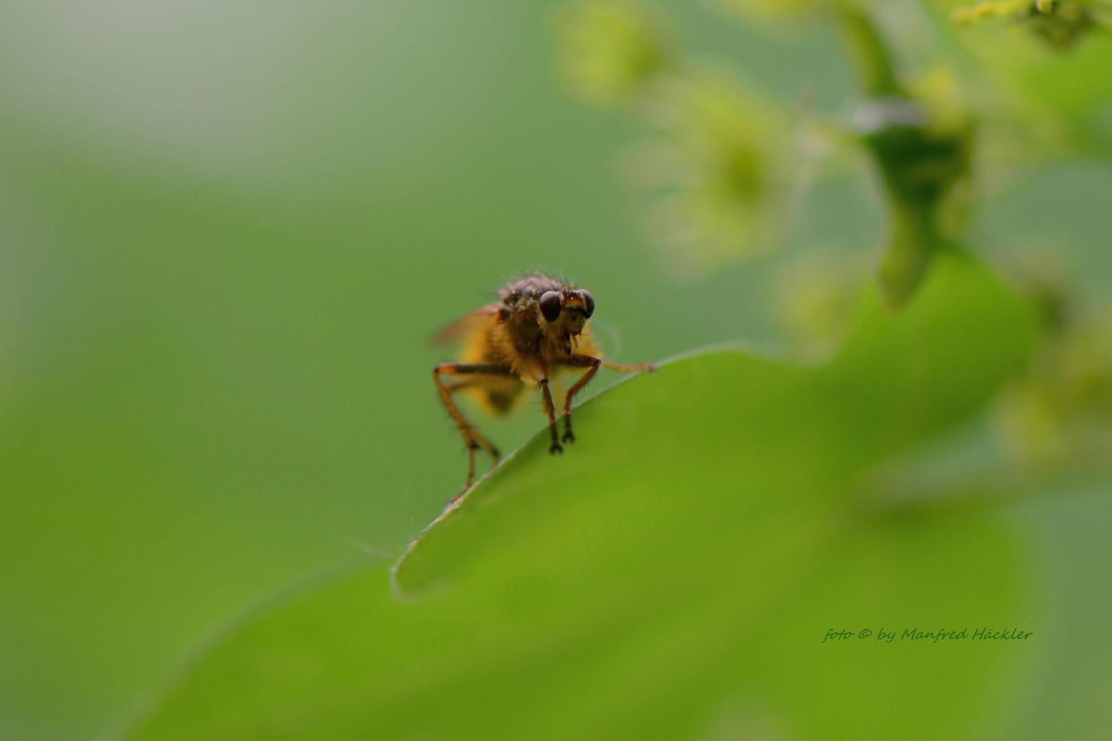 Fliegen 3
