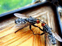 Fliegen Flirt