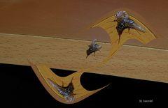 Fliegen... Koketterie! ... aufgefangene Sichtweise?