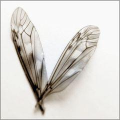 fliegen mit dir...